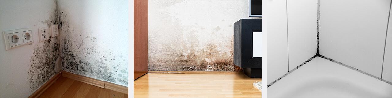 fekete penész eltávolítása falról
